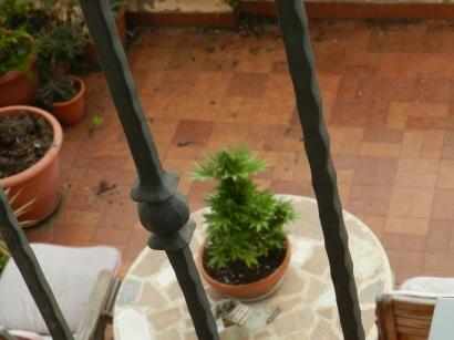 La plante de la voisine du dessous.......